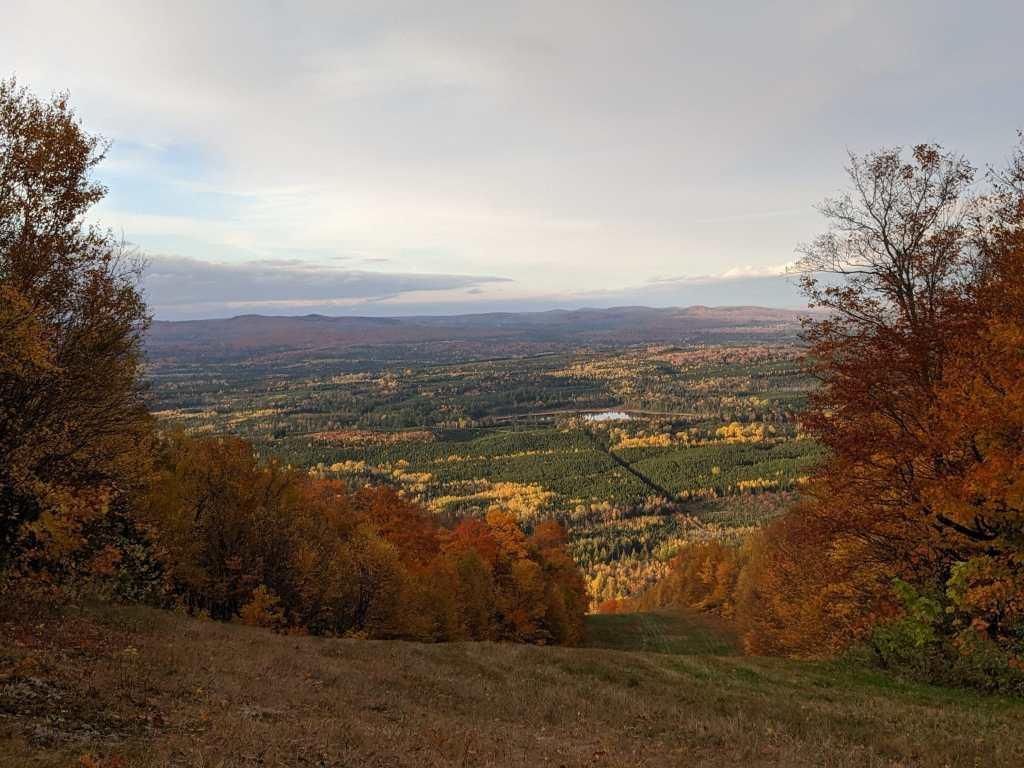 Saint John New Brunswick, field with autumn leaves