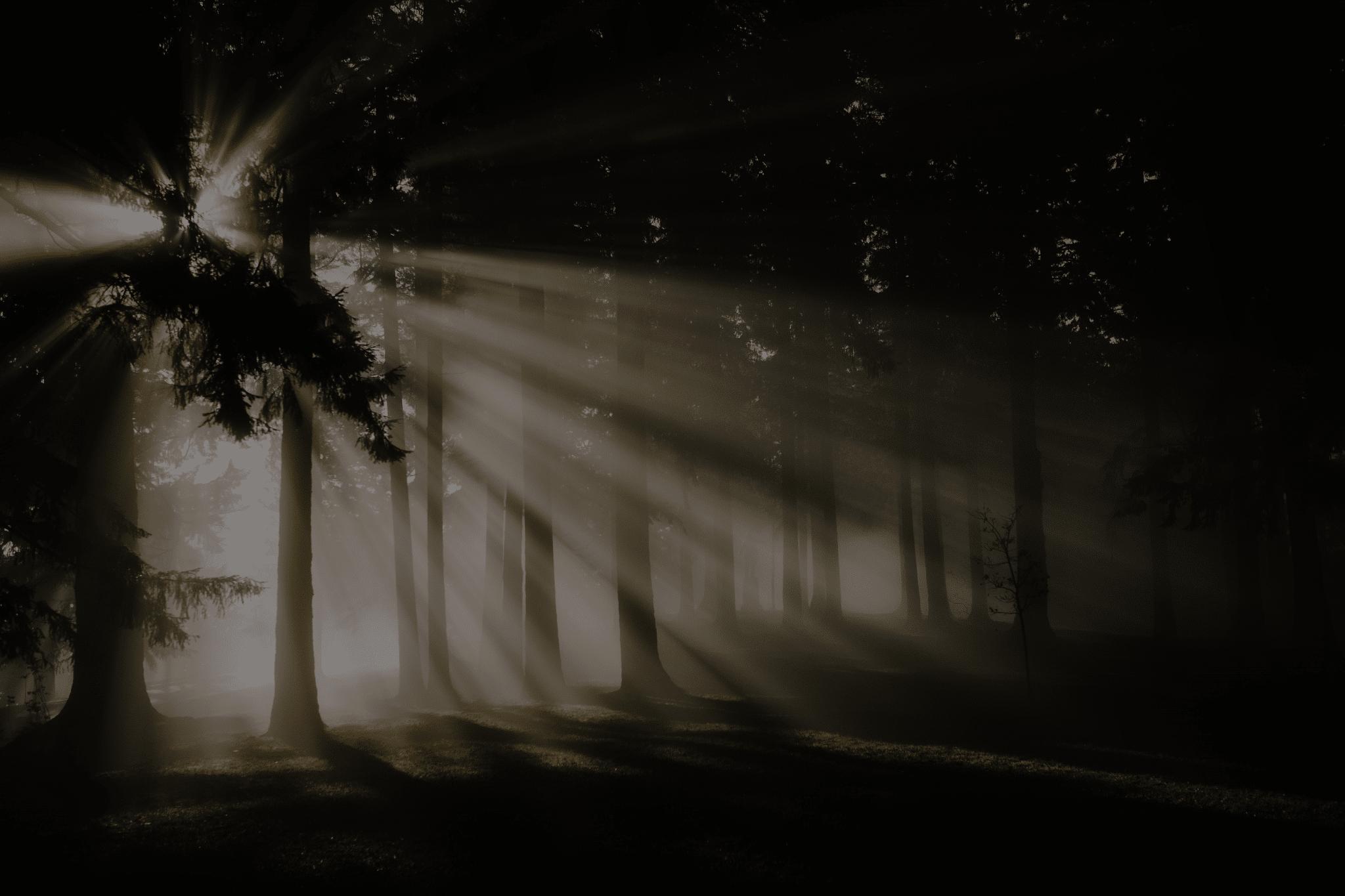 light shining through a forest
